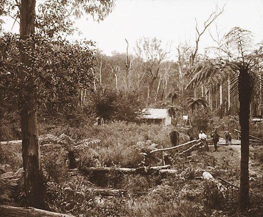 An image of A gold digger's hut near Warburton