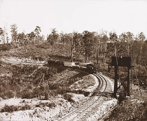 An image of Curve on the Gembrook Railway by Nicholas Caire