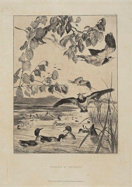 An image of Vanneaux et sarcelles by Félix Bracquemond