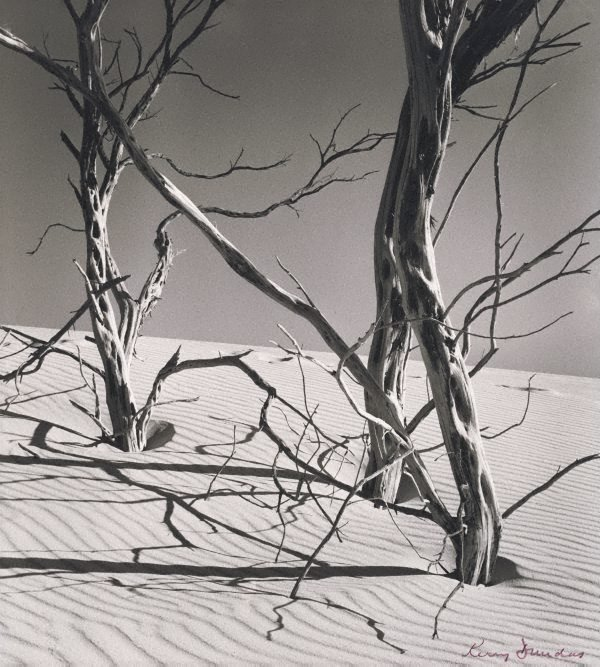 An image of Sand smothered trees