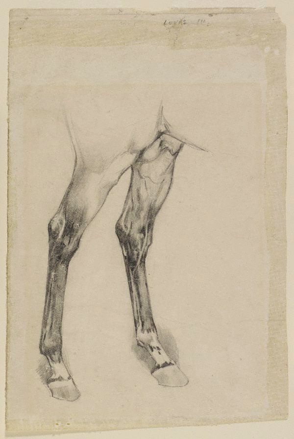 An image of Study of hind legs of a horse