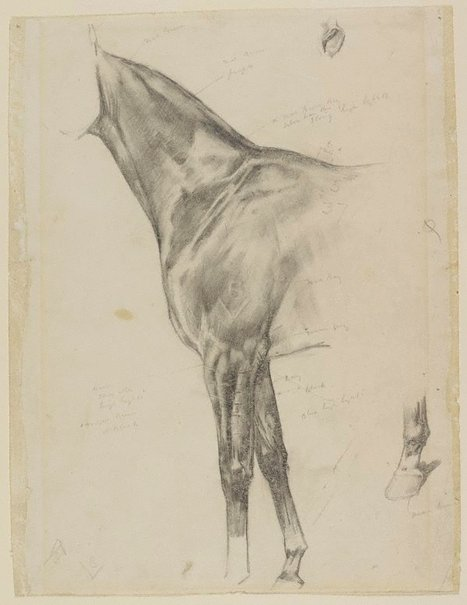 An image of Study of forequarter of a horse by Douglas Fry
