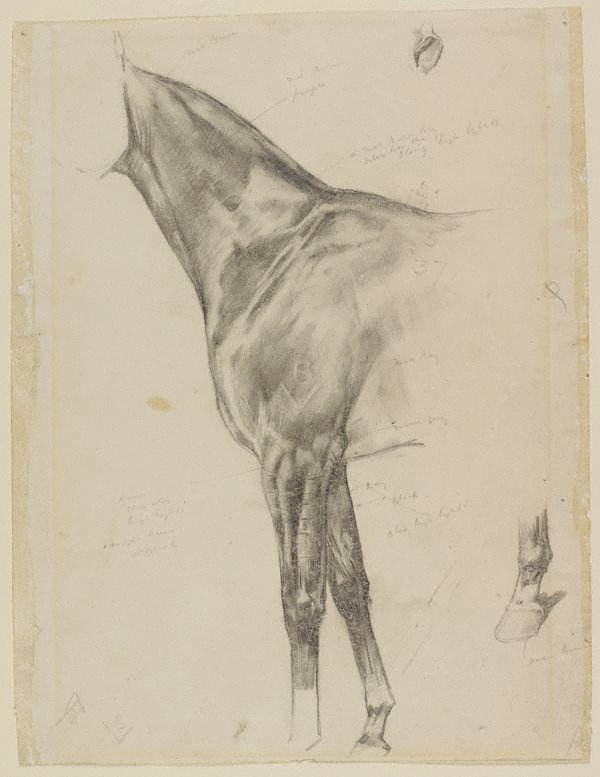 An image of Study of forequarter of a horse
