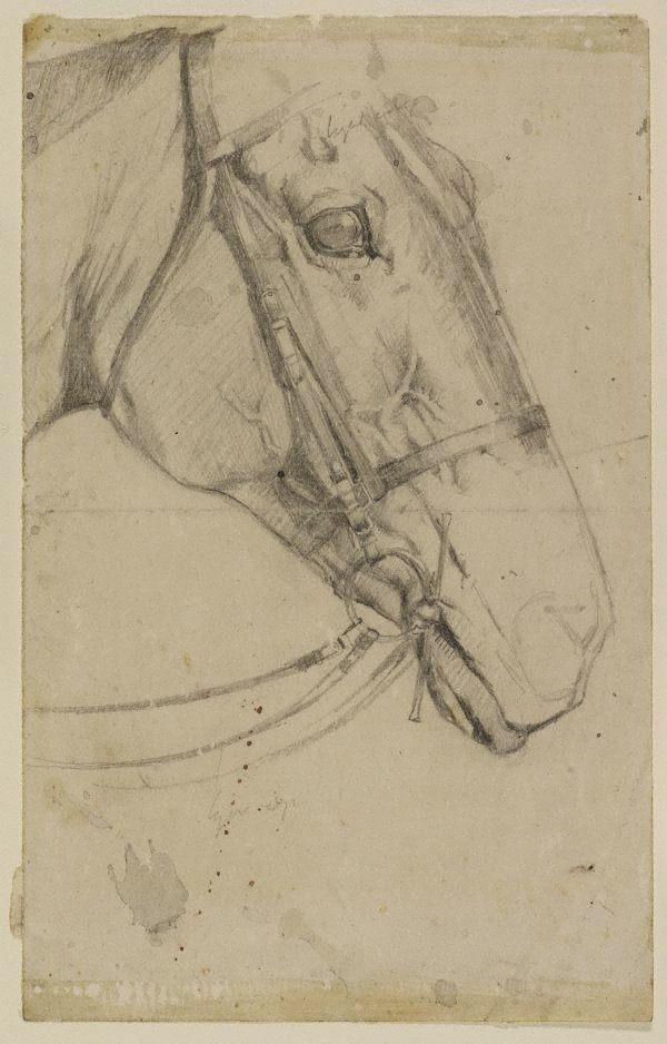 An image of Study of head of a horse