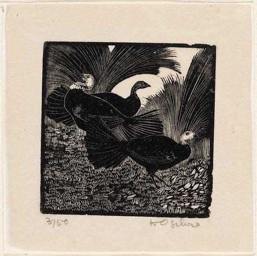 An image of Bush turkeys by Helen Ogilvie