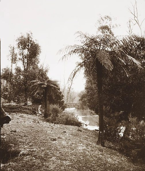 An image of Scene on the Yarra near Warburton by Nicholas Caire