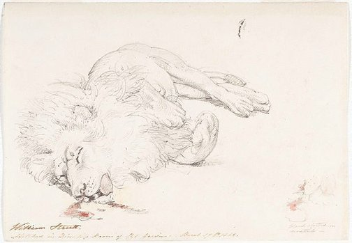 An image of Study of dead lion for 'David's first victory' by William Strutt