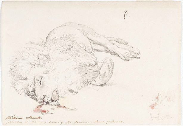 An image of Study of dead lion for 'David's first victory'