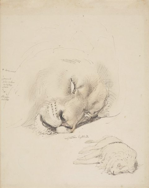 An image of Study of dead lion by William Strutt