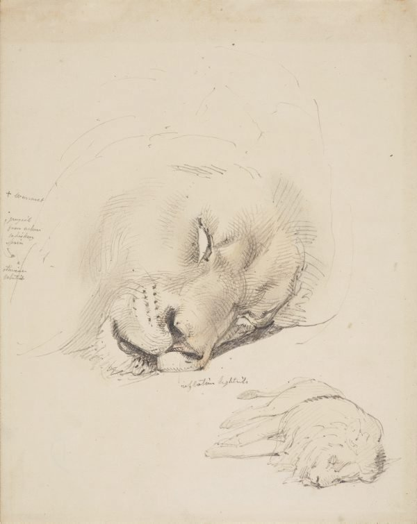 An image of Study of dead lion