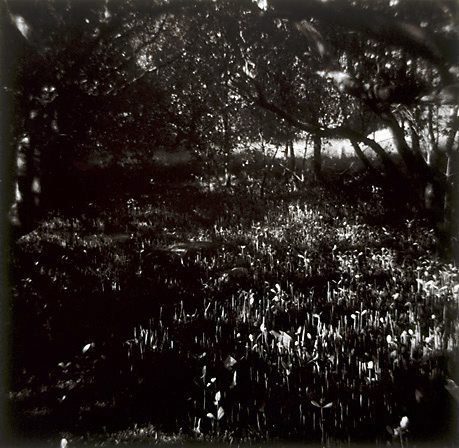 An image of Untitled (swamp)