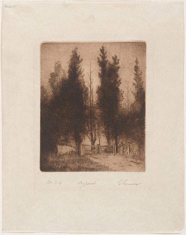 An image of The pines