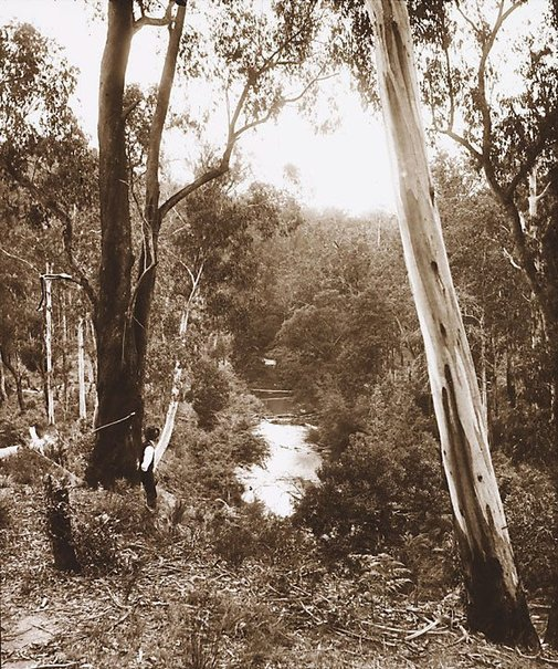 An image of Scene near Warburton by Nicholas Caire
