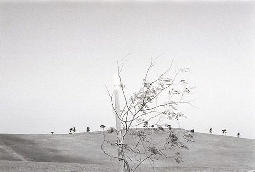 An image of Untitled (Moore Park tree) by Christine Cornish
