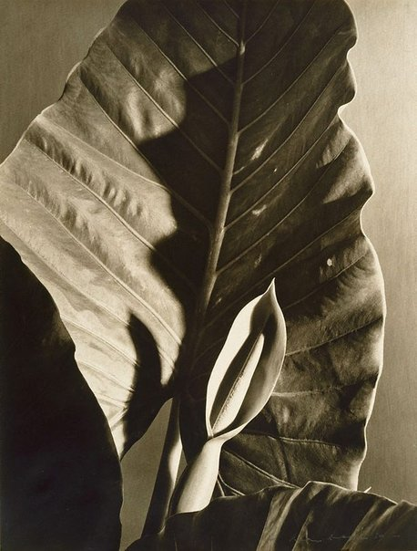 An image of Untitled by Max Dupain