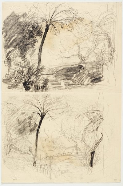 An image of recto: Bush with tree fern (twice) and Sketch of mallee trunks verso: Mallee trunks by Lloyd Rees