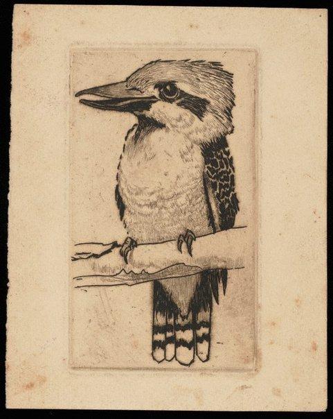 An image of (Untitled - Kookaburra) by David Barker