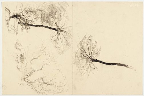 An image of recto: Two studies of tree ferns verso: Two studies of trees by Lloyd Rees