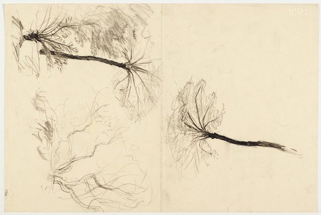 An image of recto: Two studies of tree ferns verso: Two studies of trees