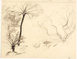 Alternate image of recto: Two studies of tree ferns verso: Two studies of trees by Lloyd Rees
