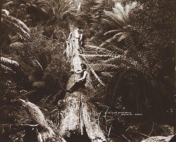 An image of A fallen Monarch