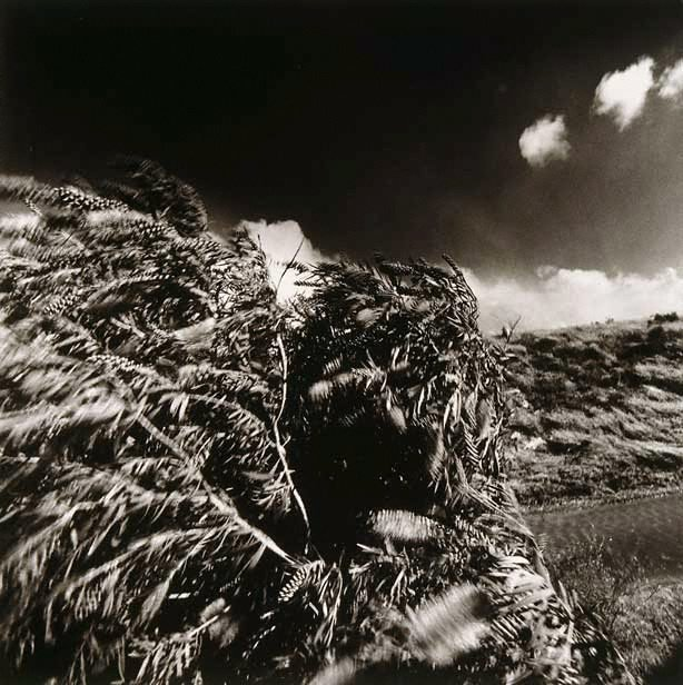 An image of Wind and bottlebrush tree, BBC Colliery