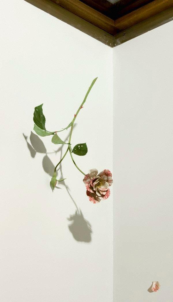AGNSW collection Suda Yoshihiro Rose 2004