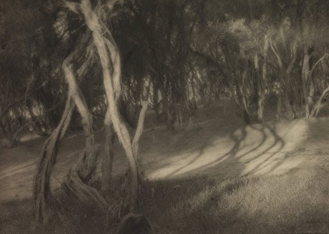 An image of Fairy woods