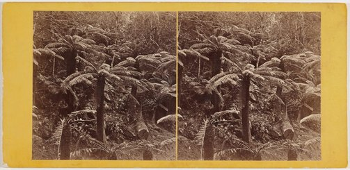 An image of Fern trees by Samuel Clifford