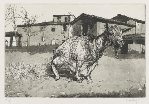 An image of Tuscan goat by Brian Dunlop