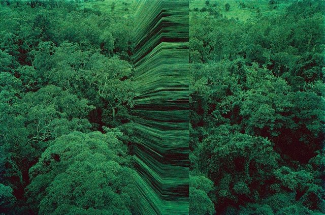 An image of greenwork, aerial wall
