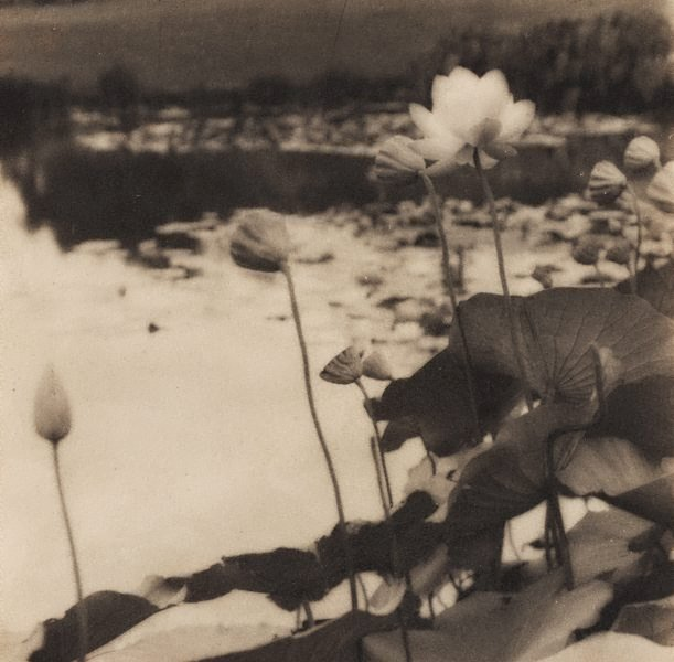 An image of Untitled (Waterlillies)