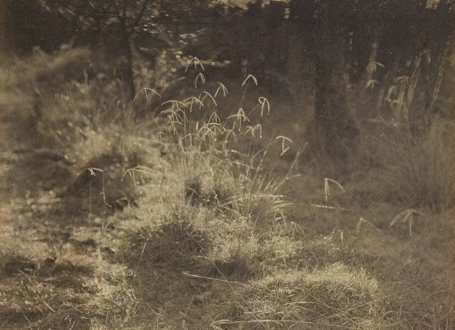 An image of Untitled (Grasses)