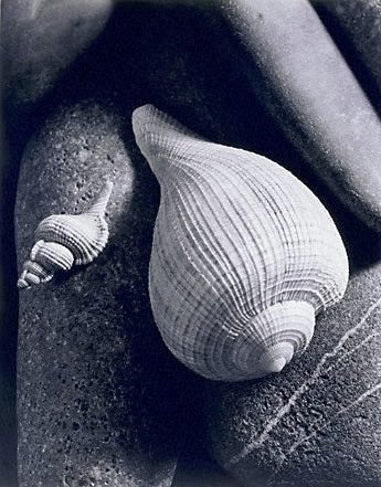 An image of Untitled (two shells on stones)