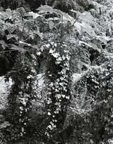 An image of Forest by Simryn Gill