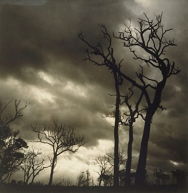 Storm, (1938) by Olive Cotton