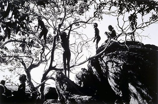 An image of The search for wild figs, Ernabella by David Moore