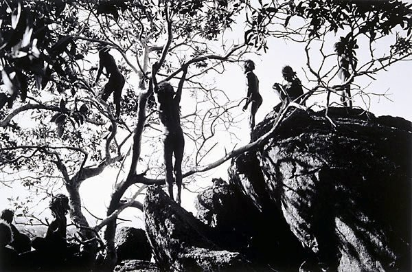 An image of The search for wild figs, Ernabella