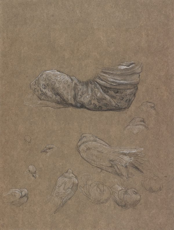 An image of Drapery study for The Bracelet, with studies of doves for Summer slumber