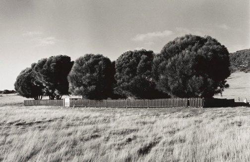 An image of The Healing Garden, Wybalenna, Flinders Island, Tasmania by Ricky Maynard