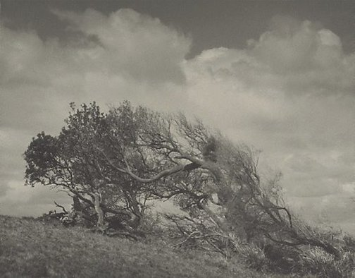 An image of South wind by EB Hawkes