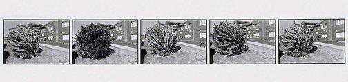 An image of Oleander wind by Jon Rhodes