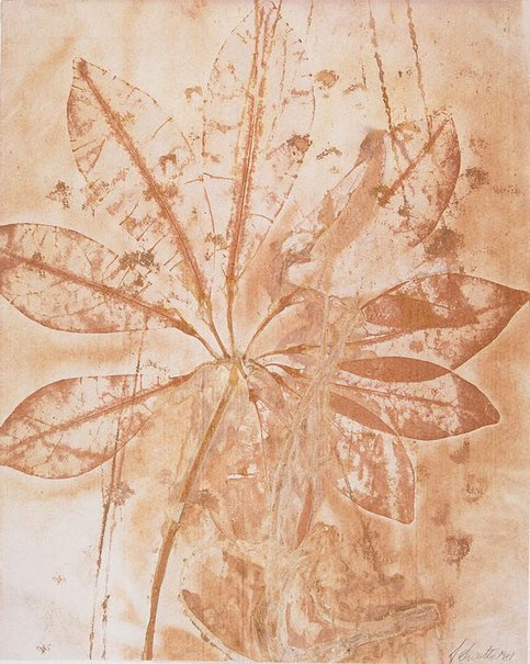 An image of Untitled (branch with nine oval shaped leaves spread over image) by Juliana Swatko