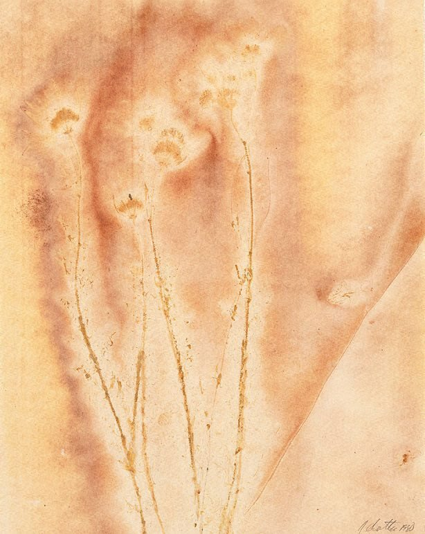 An image of Untitled (four long stems with four flowers at ends, pale yellow/brown)