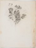 Alternate image of recto: Study, standing male verso: Tree study by Lloyd Rees