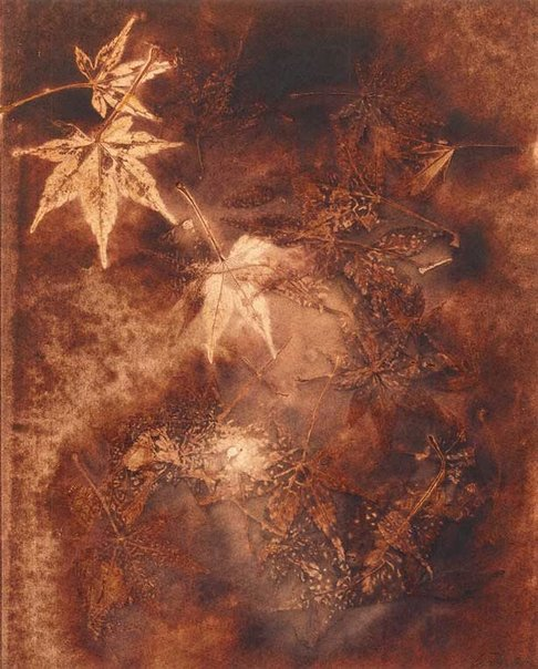 An image of Untitled (star shaped leaves on dark brown background with three lighter coloured leaves) by Juliana Swatko