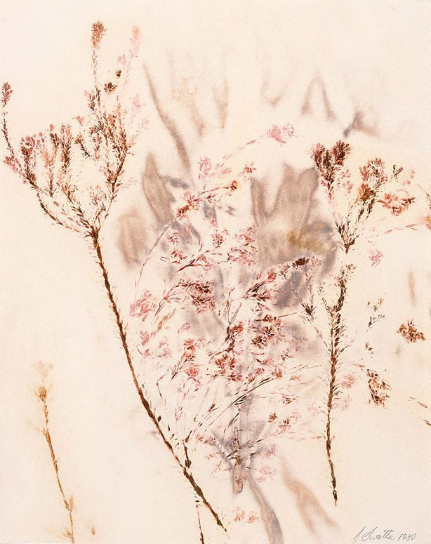 An image of Untitled (two branches covered in fine, pink foliage)