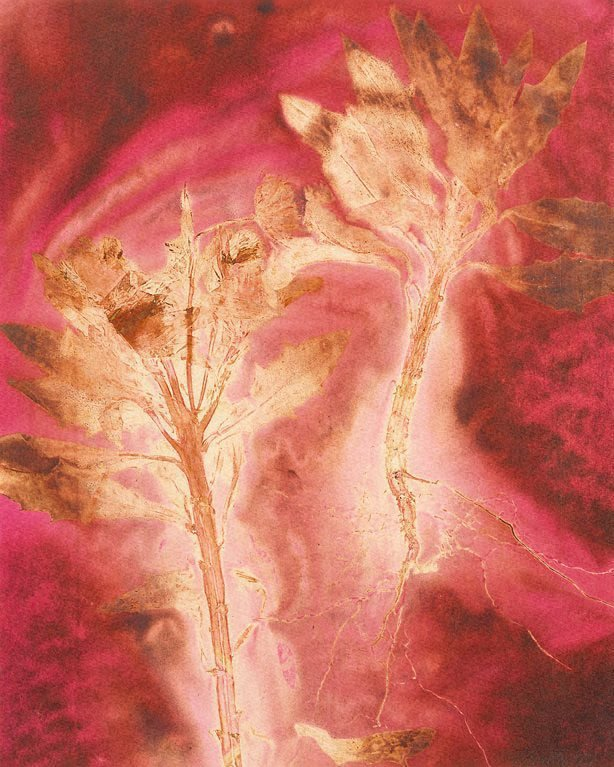 An image of Untitled (two branches with spiked leaves on crimson background)