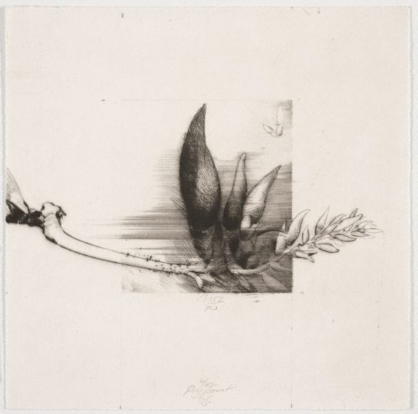 An image of Drypoint