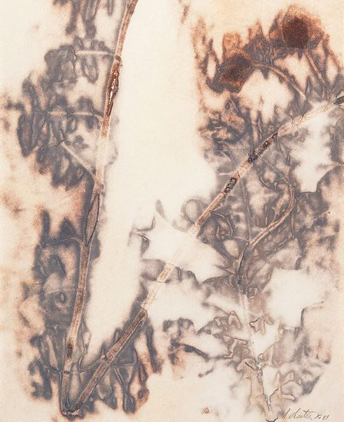 An image of Untitled ('v' shaped branch with dark brown foliage) by Juliana Swatko
